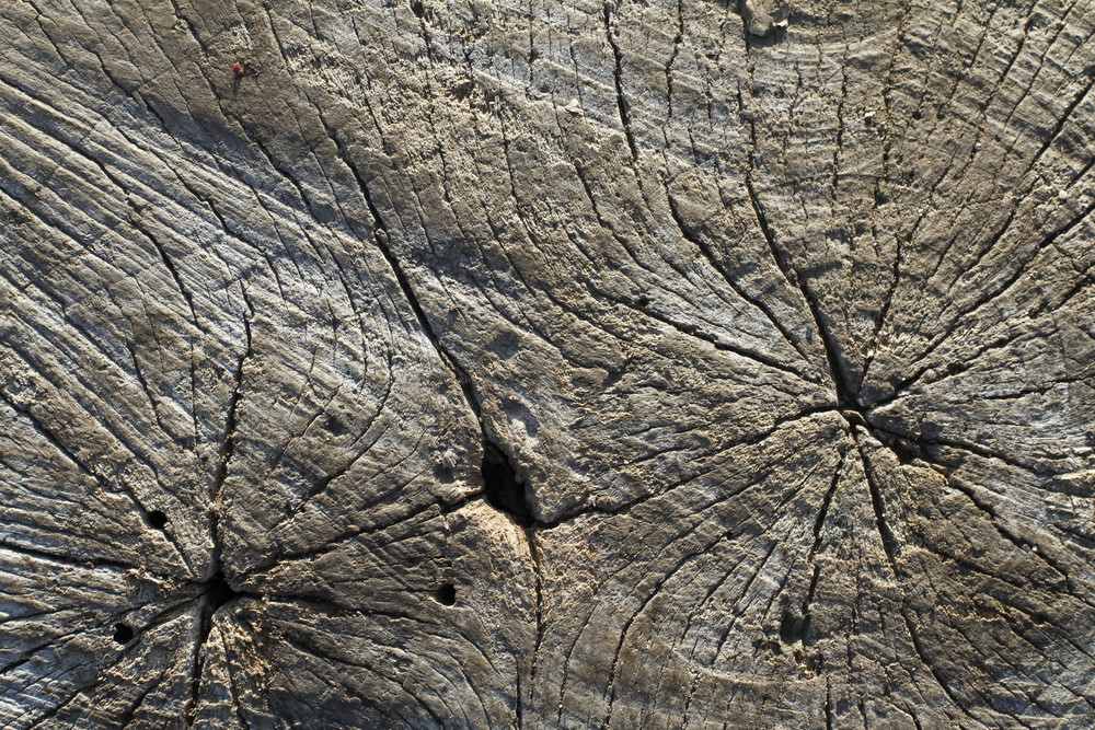 Wood Stumps 7 Texture