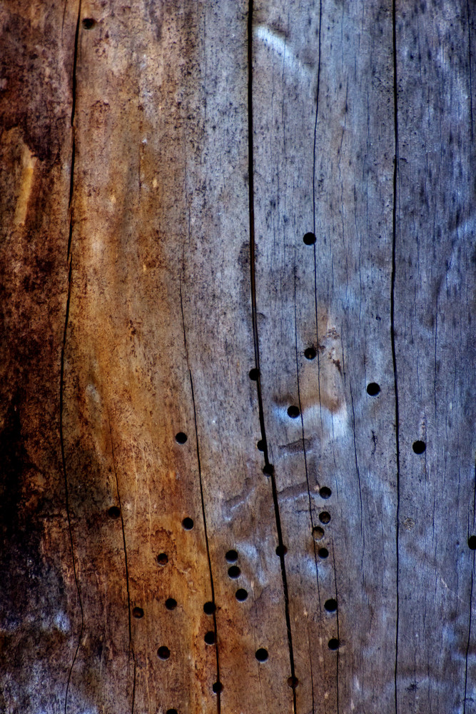 Wood Surface Texture 19