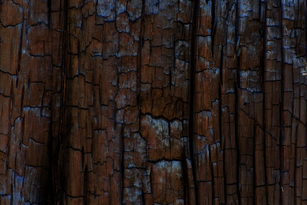 Wood Surface Texture 26