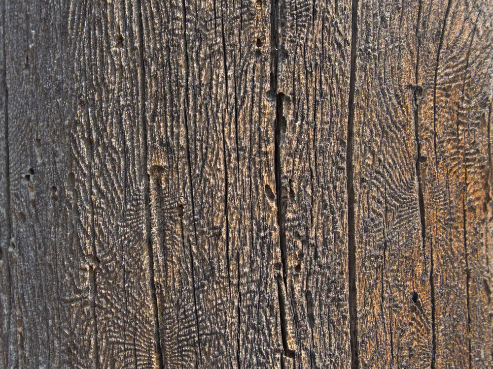 Wood Surface Texture 67