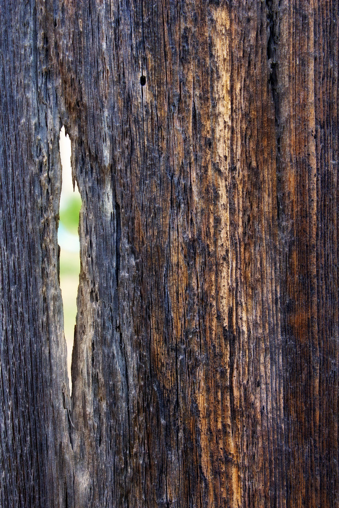 Wood Surface Texture 70