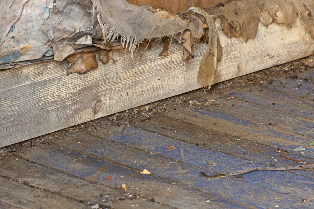 Wood Surface Texture 87