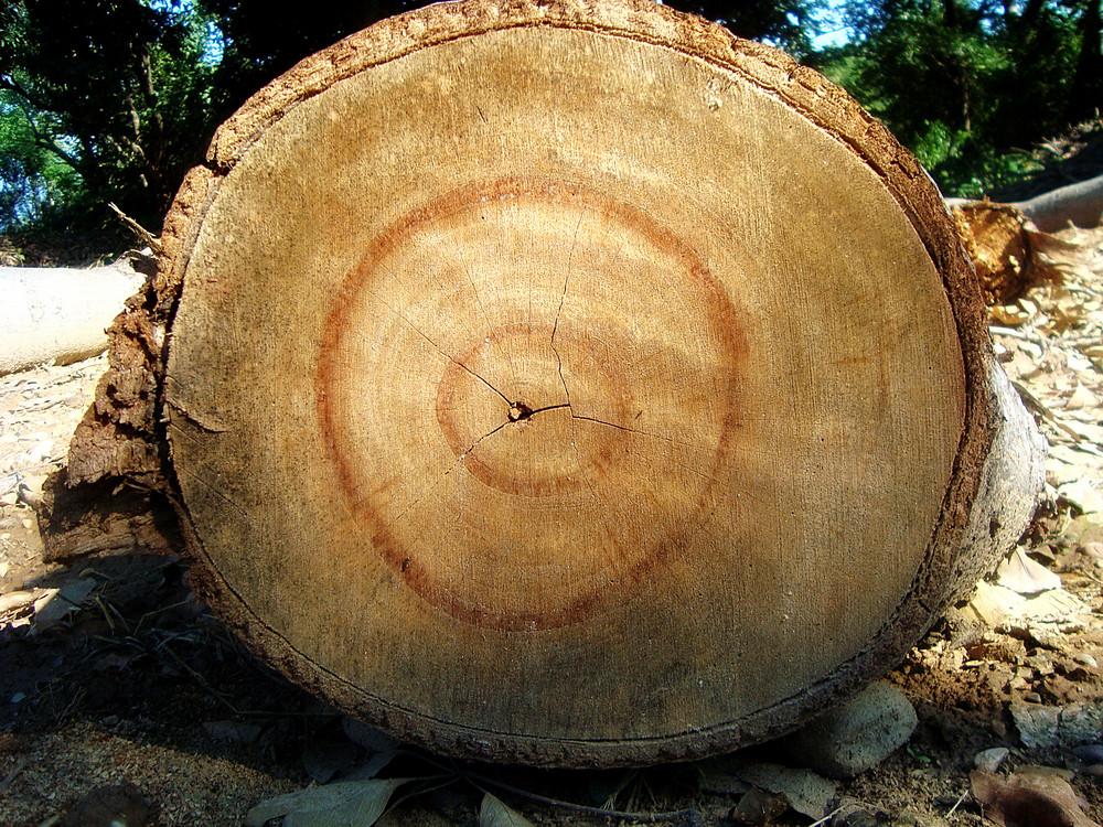 Wood_texture_eucalyptus