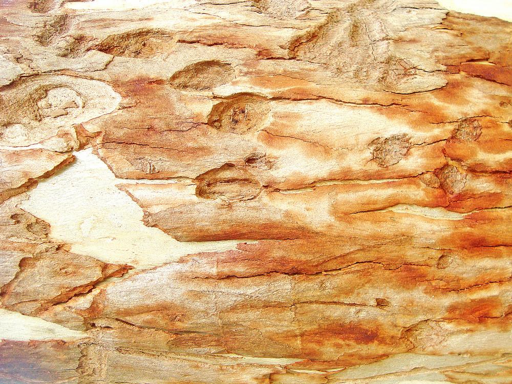 Wood_texture_rough_tree_bark