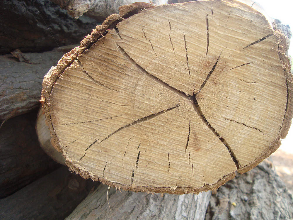 Wood_trunk_tree