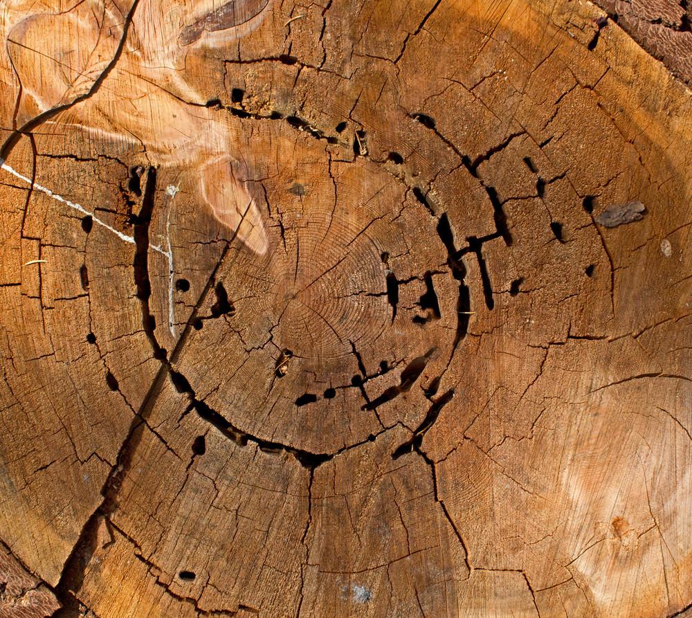 Wooden Texture 19