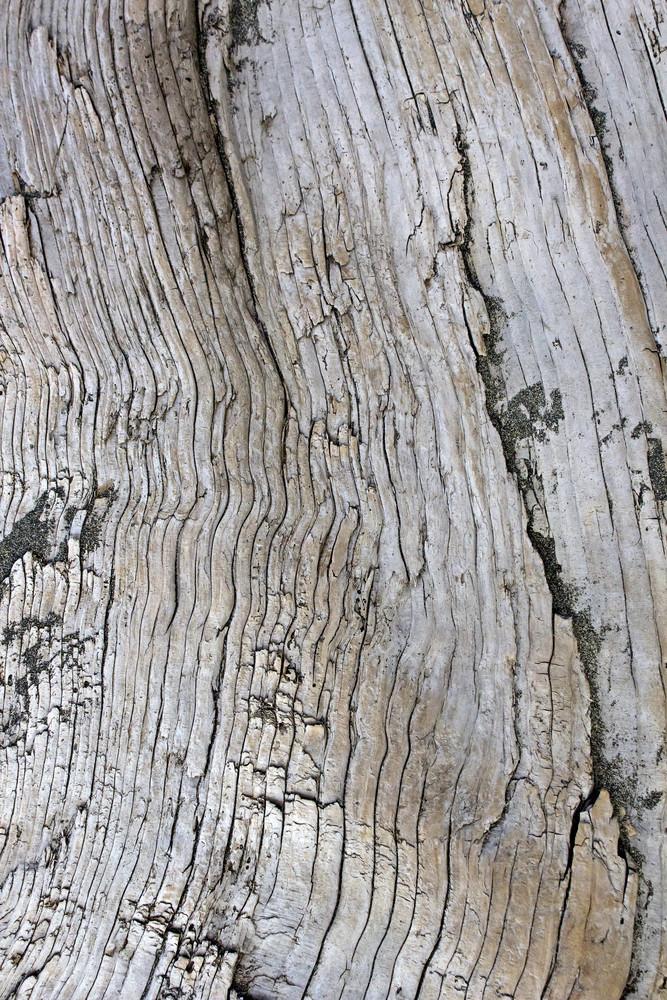 Wooden Texture 41