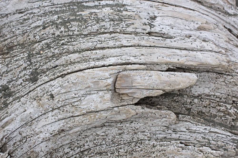 Wooden Texture 48