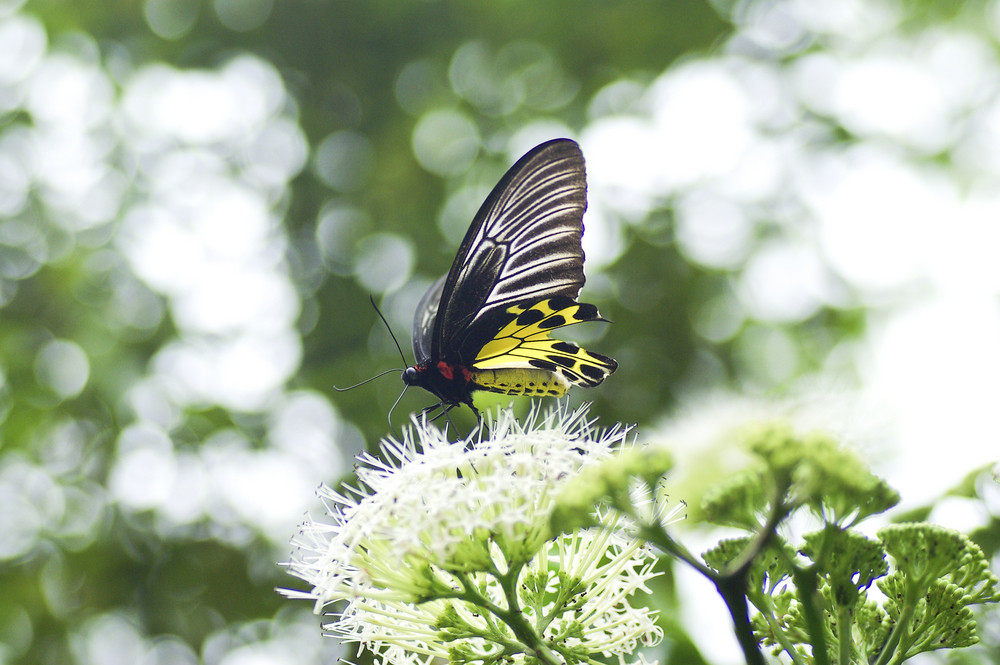 Yellow black butterfly in the nature
