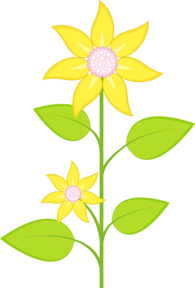 Yellow Blossom Branch