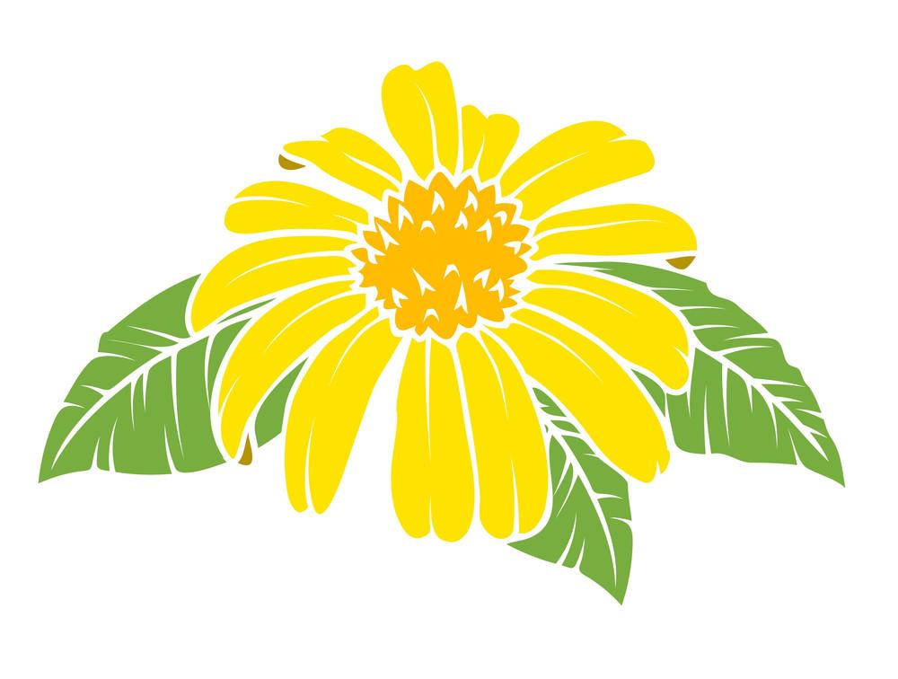 Yellow Daisy Vector