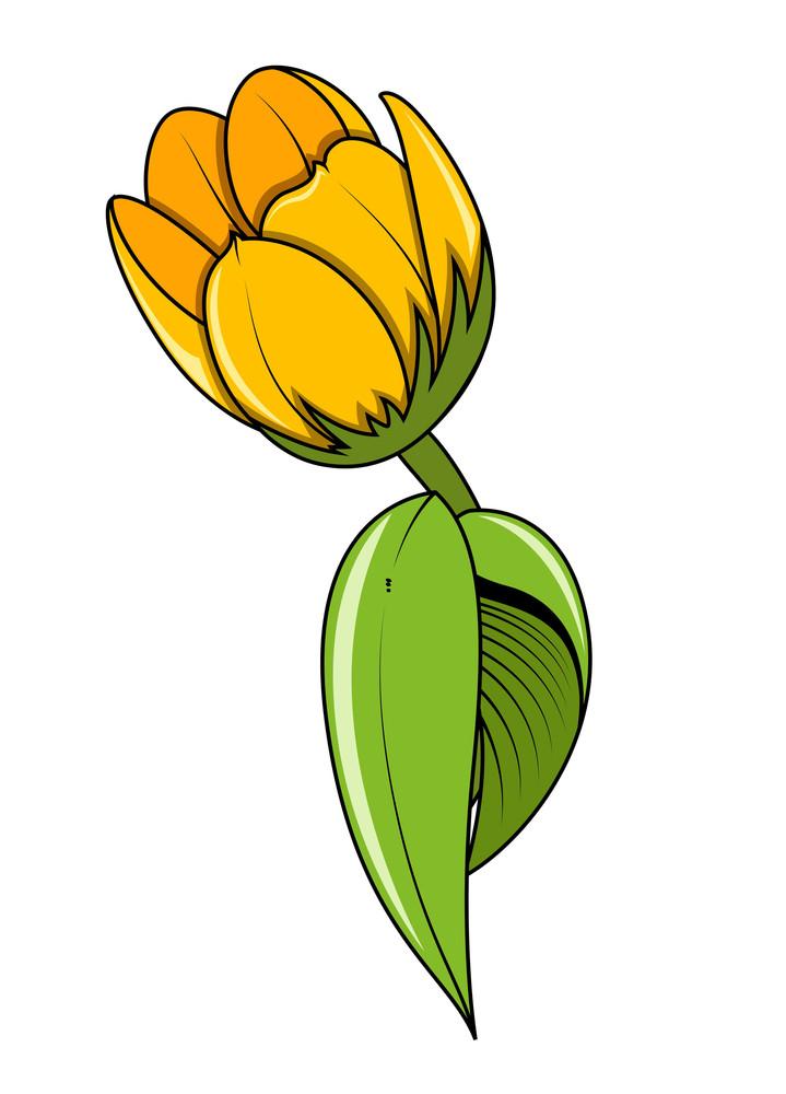 Yellow Tulip Flower Vector