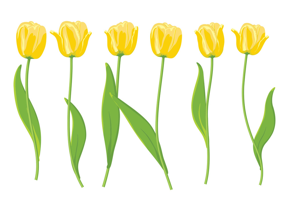 Yellow Tulips. Vector Illustration