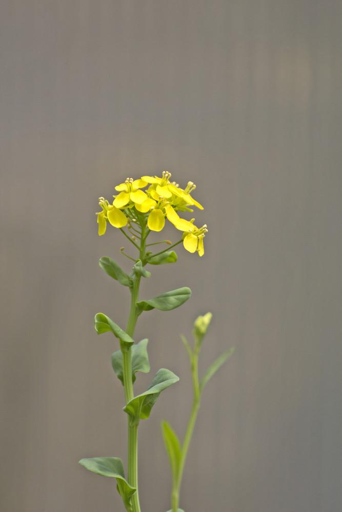 Yellow Wildflowers Twig