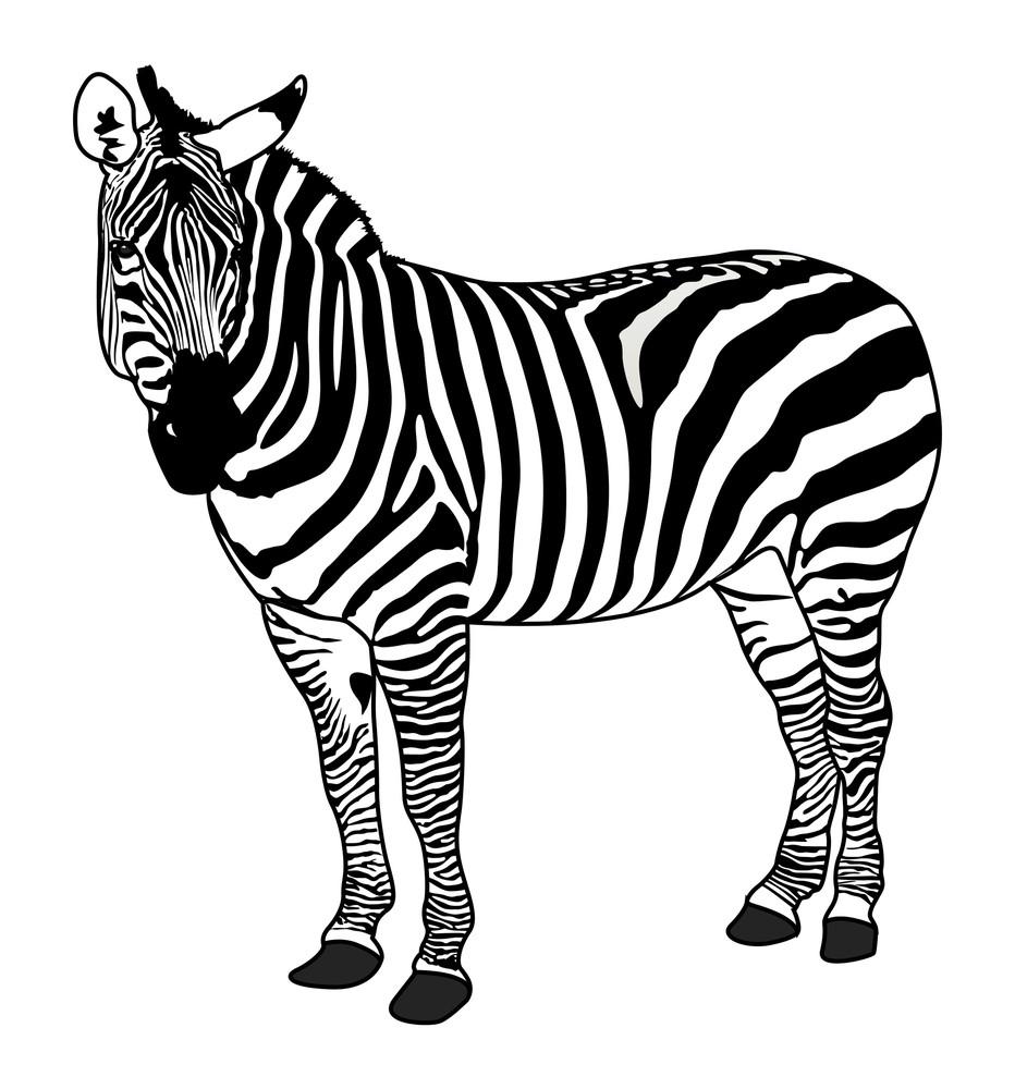 Zebra Animal Silhouette