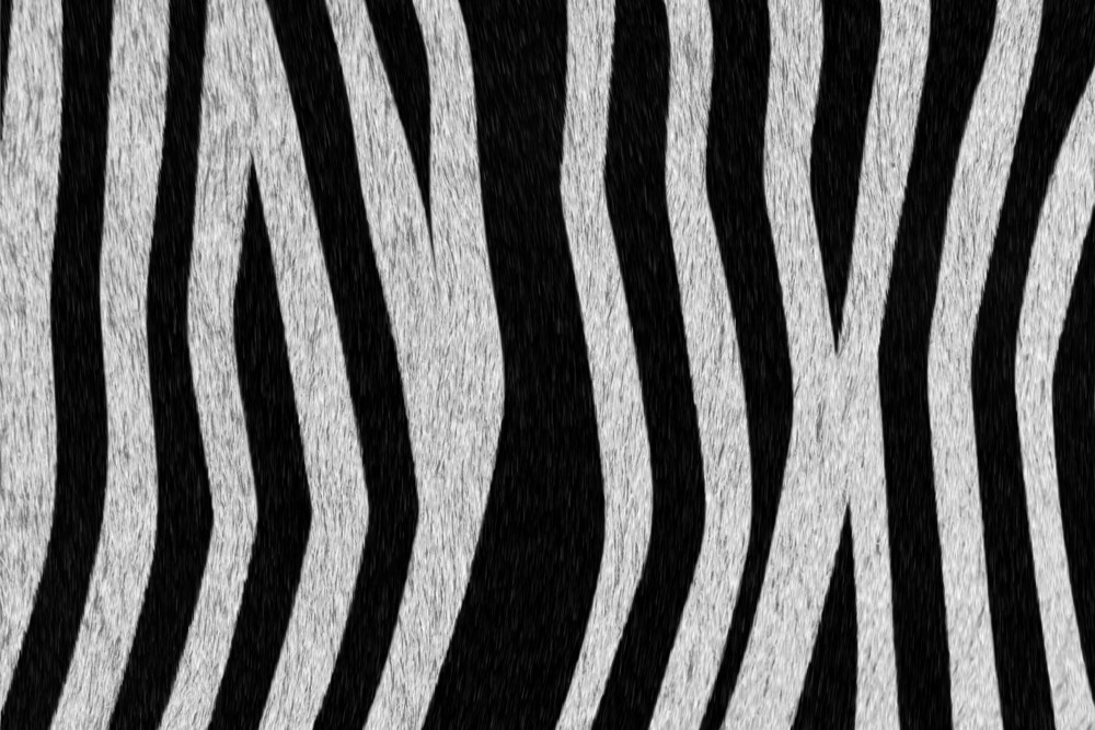 Zebra Coat Background