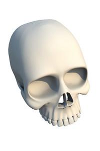 3d Skull Bone