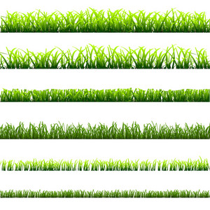 6 Different Types Of Green Grass
