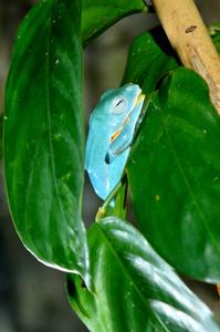 Frog in terrarium