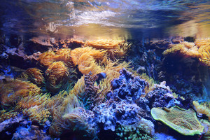Marine aquarium on display in a zoo