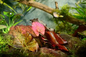 Natural aquqrium representing tropical biotop
