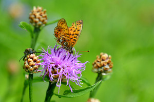 A Bug And A Butterfly Feeding On A Flower