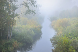 Mornig River And A Forest River