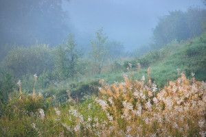 晨霧上面的字段