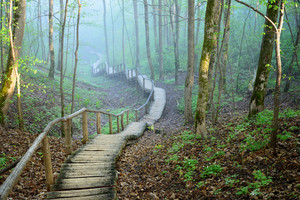 Stairway In Forest Disappearing In Strong Fog