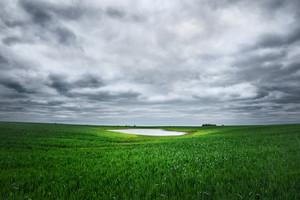 Field In Lithuania