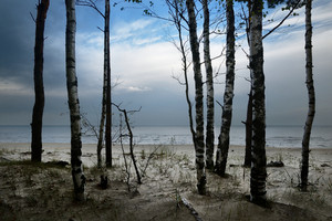 Baltic Sea Shore In Dramatic Light