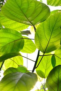 Green Tropical Plants Close-up