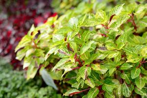 Tropical Plant Close-up
