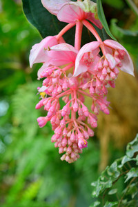 Exotic Blooming Plants With Pink Flowers