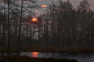 Kemeri Bog In Latvia. Forest Swamp Scene.