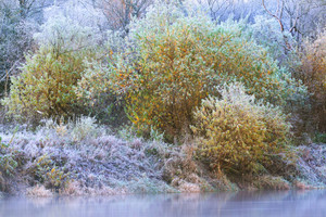Frozen Winter Landscape. Trees With The Frost And A River