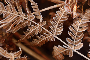 Brown Autumn Fern Pattern
