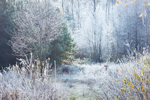 Landscape With The Frozen Plants And The Frost