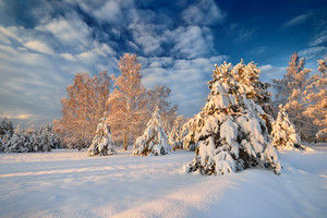 Snow Covered Winter Forest In Latvia