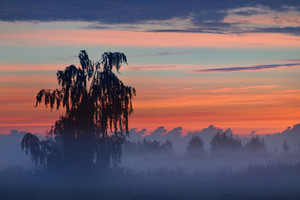 Colorful Sunrise At The Field With Morning Fog