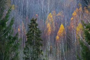 Forest Scene In Autumn