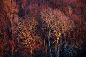 Forest Areal View At The Sunset. Red And Pink Trees Texture.