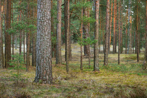 Northern Forest Landscape
