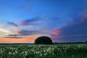 Sunset Over A Mysty Field In Countryside Latvia