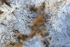 Snow Crystals Close-up