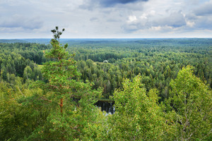 Forest Covered Hills In Latvia