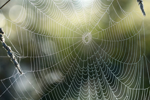 Beautiful Spider Web With Water Drops Close-up