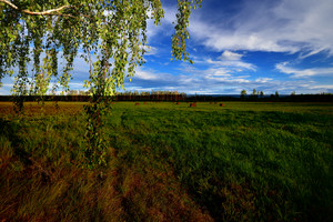 Green Field. Classic Countryside Landscape
