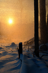 Falling Snow In Winter Forest At The Sunset