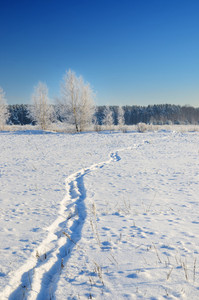 Winter Countryside View